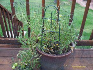Using Bird Netting Gardenerscott