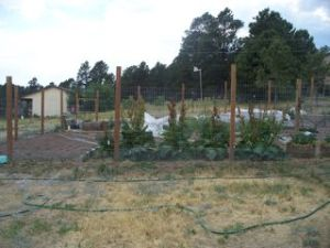 The transformed vegetable garden