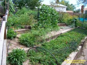 The finished vegetable garden