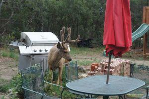 Deer by table